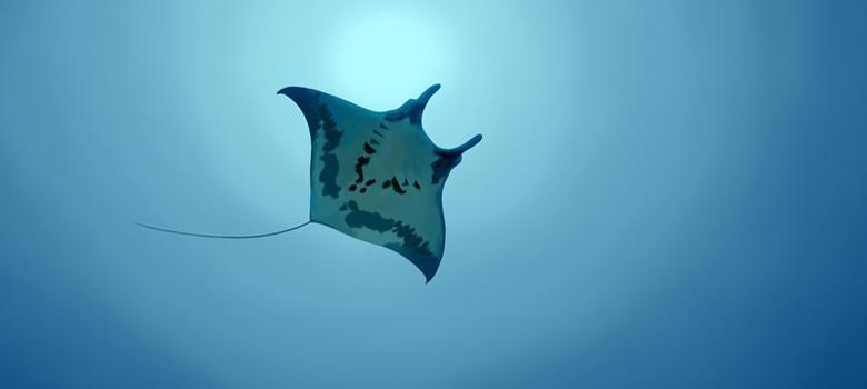 maldiv3.jpg
